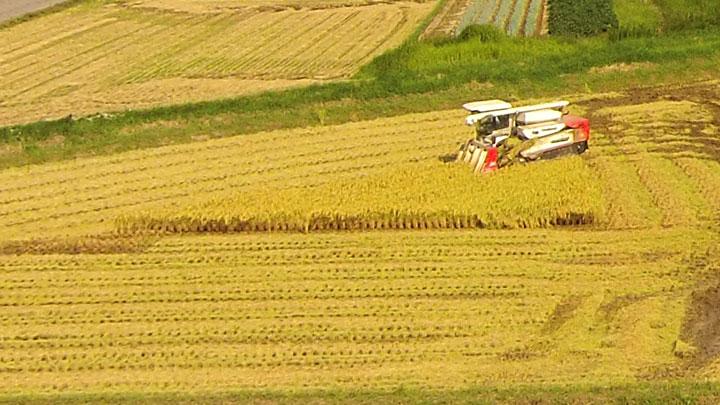 農業・コンバイン稲刈り